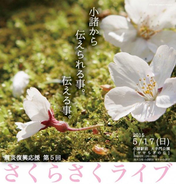 20150330-5-sakura-top.jpg