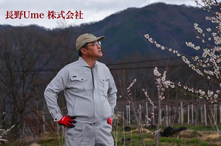 長野県産 南高...